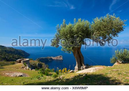 Miramar estate and Sa Foradada headland at Valldemossa, Valldemosa, Mallorca, Majorca, Balearic Islands, Spain, Europe - Stock Photo