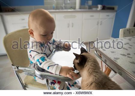 Baby boy in high chair feeding cat - Stock Photo