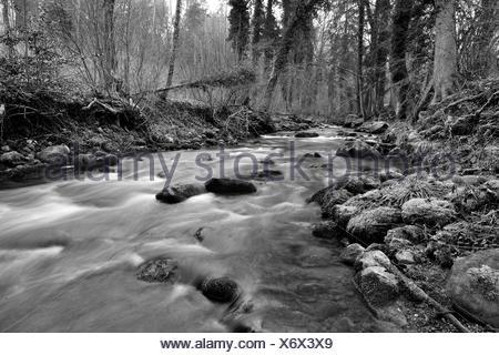 Jonen river undergrowth - Canton of Zurich Switzerland - Stock Photo