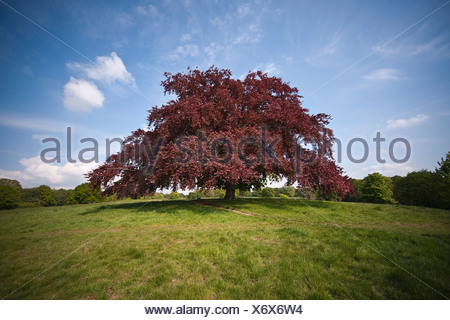 Tree in field against blue sky - Stock Photo