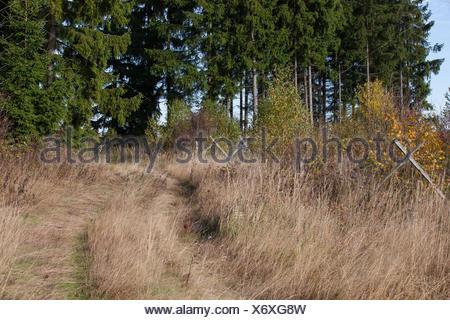 Wiesenweg im Herbst - Stock Photo