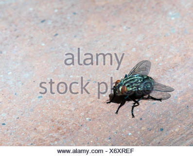 Fly, close up - Stock Photo