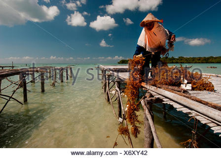 Wa Nuri is part of a cooperative of fisherman and aquaculture workers trying to create more sustainable practices in the Wakatobi region of Indonesia. Various projects through-out Indonesia where the international conservation organization The Nature Cons - Stock Photo