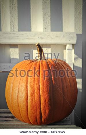 Huge pumpkin on garden bench - Stock Photo
