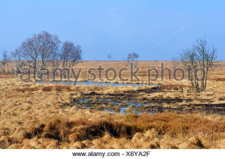 View across High Fenns, largest upland moor in Europe, German-Belgian High Fens – Eifel Nature Park, Belgium - Stock Photo
