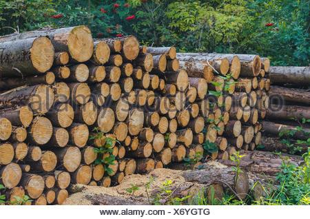 Holzstapel im Wald zum trockenem für die Verwendung als Kaminholz - Stock Photo
