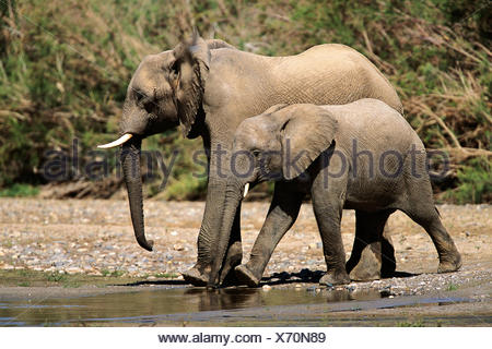 African Elephant Mother and Calf at Waterhole Africa - Stock Photo