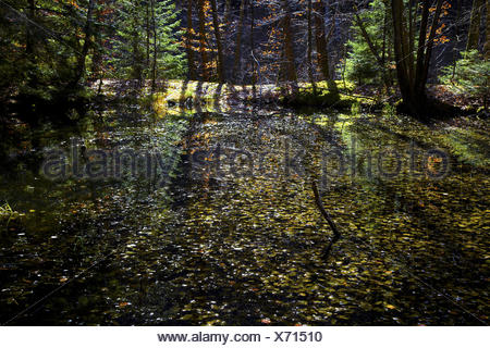 nature reserve Mosbachtal near Dahn, Germany - Stock Photo