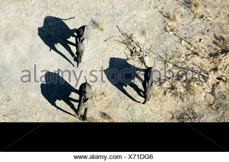 Aerial view of elephants and shadows Amboseli National Park Kenya - Stock Photo