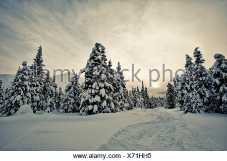 Turnagain Pass in winter, Alaska - Stock Photo