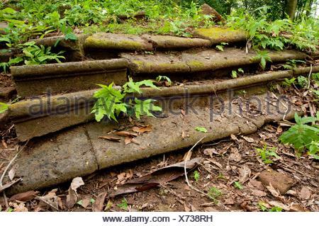 Bricks stairs in Camino de Cruces spanish colonial trans-isthmian path Soberania National Park, Gamboa, Colon province, Panama, - Stock Photo