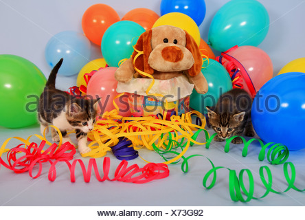 Two kitten celebrating a birthday with balloons and paper streamers - Stock Photo
