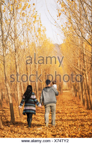 Rear view of couple walking in forest with baby daughter - Stock Photo