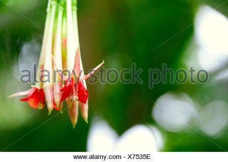 beautiful fuchsia flower on a tree branch - Stock Photo
