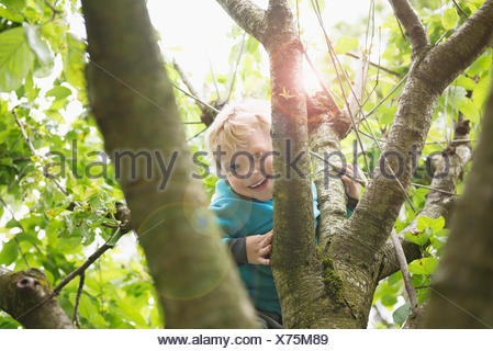 Young blonde boy in garden playing in cherry tree - Stock Photo