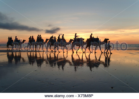 Camel caravan, Cable Beach, Broome, West Kimberlys, Australia Stock Photo