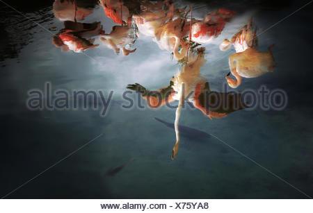 Reflection of a flock of Flamingos, Valencia, Spain - Stock Photo