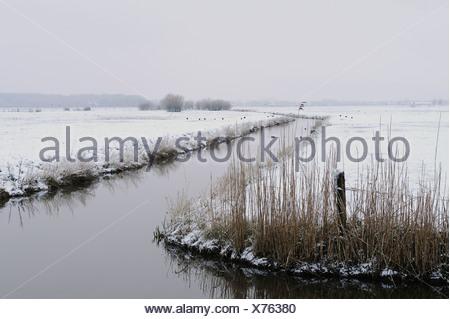 Besneeuwd landschap met sloot in polder Arkemheen, Snow-covered landscape with ditch in polder Arkemheen - Stock Photo