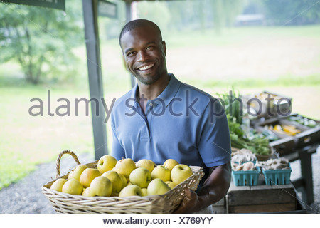An organic fruit and vegetable farm. A man carrying vegetables. - Stock Photo