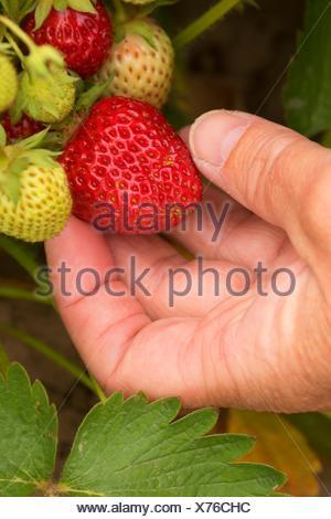 Oregon Oregon U-Pick farms: Find a pick your own farm near ...