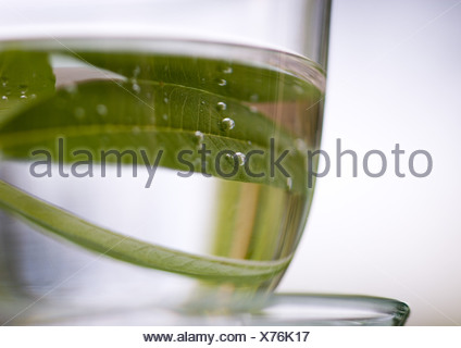 Verbena leaves in cup of water - Stock Photo