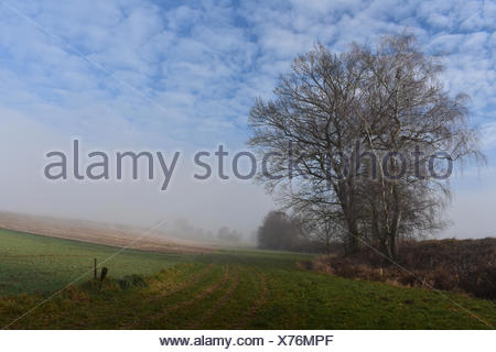 the morning fog is in ampertal - Stock Photo