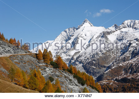 Grossglockner, autumnal larches, view from Grossglockner High Alpine Road, Hohe Tauern National Park, Carinthia, Austria, Europe - Stock Photo