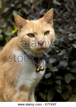 A ginger cat in the garden. - Stock Photo