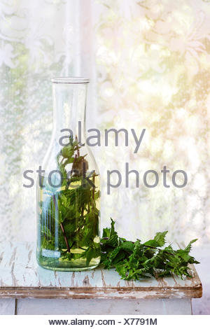 Bottle of hot herbal tea with bunch of fresh mint, served on old wooden stool with window at background. Rustic style, natural d - Stock Photo