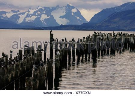 Puerto Natales, Region of Magallanes, Antarctica Chilena, Patagonia, Republic of Chile, South America. - Stock Photo