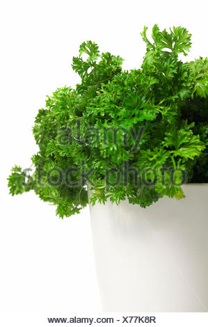 health, green, boil, cooks, boiling, cooking, flowerpot, parsley, herbs, food, - Stock Photo