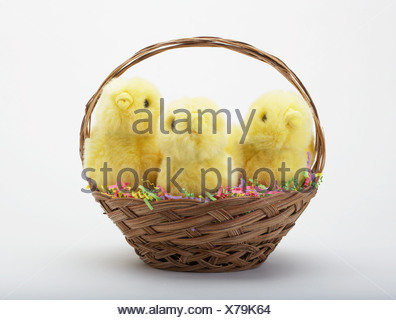 Easter chicks in a basket - Stock Photo