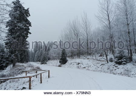 Waldweg im Nationalpark Harz - Stock Photo