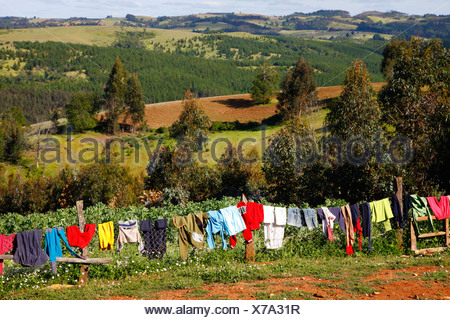 Laundry drying, Mapuche land, agricultural landscape, Bio-Bio region, Chile, South America - Stock Photo