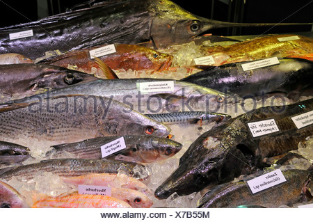 Different kinds of sea fish on the fair 'Gruene Woche' in Berlin - Stock Photo