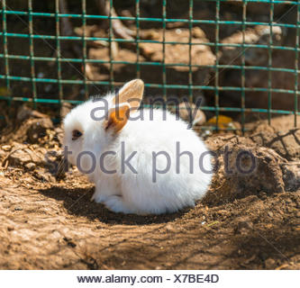 Young white rabbit in a cage, captive - Stock Photo