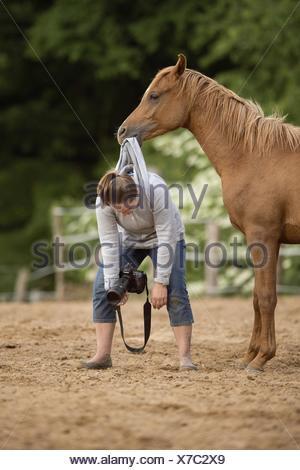 woman and arabian horse - Stock Photo