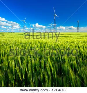 Wind turbines in barley field in spring, blue sky with cumulus clouds, Burgenlandkreis, Saxony-Anhalt, Germany - Stock Photo