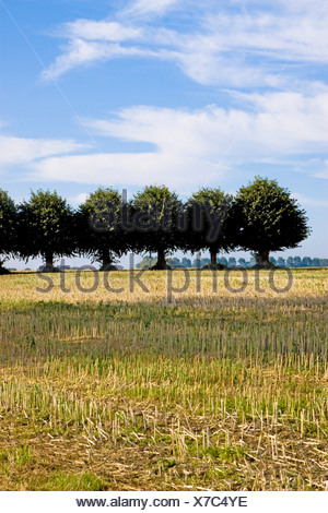Germany, Wismar, Insel Poel, row of trees in countryside - Stock Photo