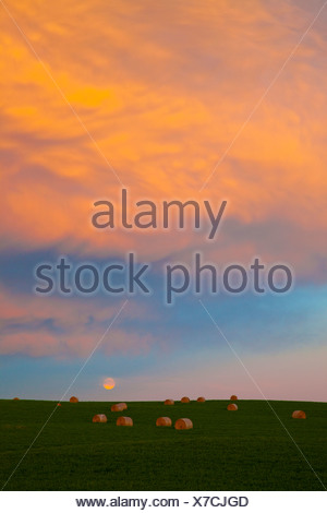 Hay bales in a field near Pincher Creek, Alberta, Canada at sunset - Stock Photo