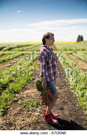 Pensive female farmer harvesting carrots in crop on sunny farm - Stock Photo