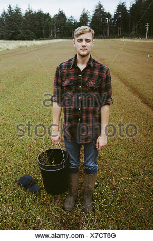 A cranberry farm in Massachusetts Crops in the fields A young man working on the land harvesting the crop - Stock Photo