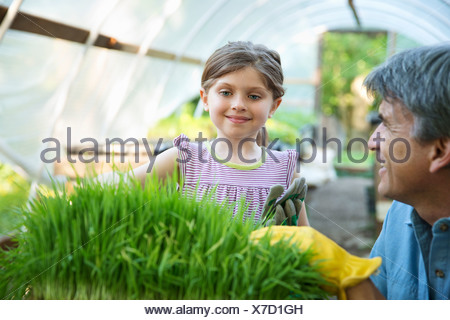 On the farm. A glasshouse. Trays of fresh green herbs. An adult and a child tending to the plants. A man and a young girl. - Stock Photo