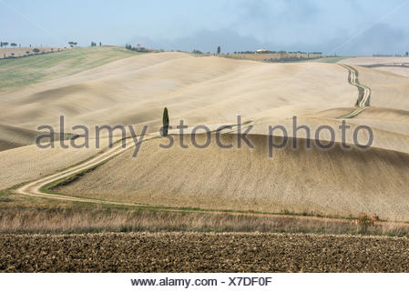 Italy, Tuscany, San Quirico D'orcia, Long twisting rural road leading through endless fields and lonely cypress tree - Stock Photo
