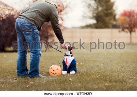 Man in park petting his boston terrier wearing business attire for halloween - Stock Photo