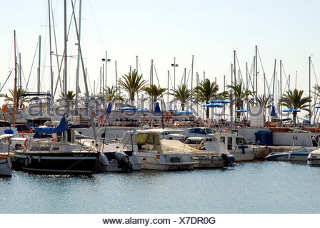 Boats in Club Nautic s'Arenal, marina with palm trees in Arenal, Balearic Islands, Mediterranean Sea, Spain, Europe - Stock Photo