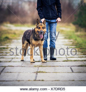 Master and her obedient (German shepherd) dog - Stock Photo