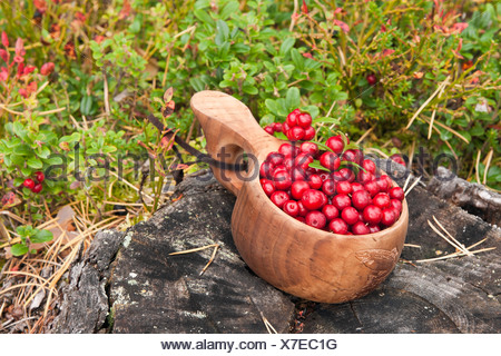 Freshly picked cranberries in a small wooden bowl, Norway, Scandinavia, Europe - Stock Photo