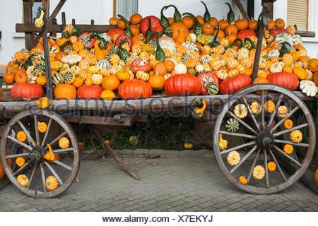 Different varieties of pumpkins, pumpkins on wooden cart, Baden-Württemberg, Germany - Stock Photo
