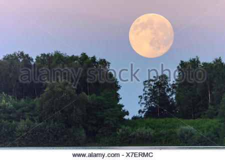 Vollmond ueber dem Dammer Bergsee, Deutschland, Niedersachsen, Damme | full moon over forest, Germany, Lower Saxony, Damme | BLW - Stock Photo